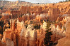 Bryce Canyon : 30 Nov '12.  At last, the ultimate fairyland.